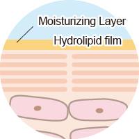 Moisturizing Layer